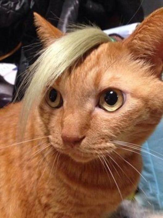 卡西欧资讯-猫