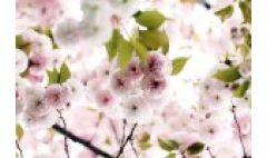 卡西欧官方商城 走出冬天的懒惰阴影,与卡西欧一起享受春暖花开